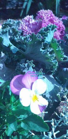 Kékrózsa Bíborvirág Blogja: Lövey-Varga Éva  Sármos évek  - A gondatlan orvosn... World, Plants, Mint, Plant, The World, Planting, Planets, Earth