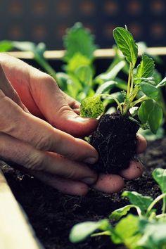 Découvrez en vidéo comment faire votre propre carré potager ! Garden Landscaping, Landscape, Fruit, Diy, Gardens, How To Make, Front Yard Landscaping, Scenery, Bricolage