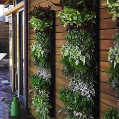 Wall decoration. Better with plants!