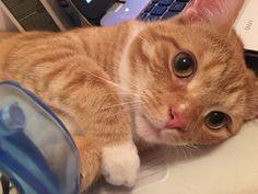 Biubiu Cat | Pawshake