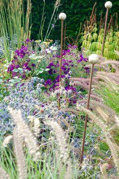 Aster 'Marina Wolkonsky', Eryngium planum 'Blaukappe' and Pennisetum 'Karley Rose' Sea Holly, Aster, Late Summer, Land Scape, Garden Plants, Perennials, Garden Design, Composition, Yard