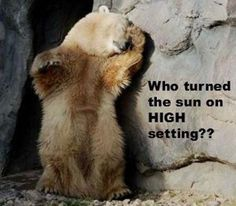 funny quotes and pictures 322 (33 pict) | Funny pictures