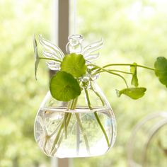 DIY home decoration  Can do this with any glass or any plant ;)