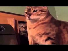 Ninja thug cat appears from cabinet and throws a pimp-slap. Str8 Pimpin edit - YouTube