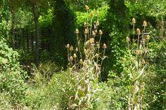 Schaugärten in Österreich - #niederösterreich #schaugärten #askEnrico #tulln #gartentulln Plants, Nature, Lawn And Garden, Plant, Planets
