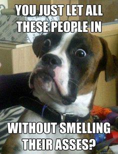 Best of Baffled Boxer Dog Meme