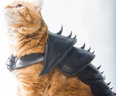 Ensure Mr. Meowington is equipped to fend off any evil that threatens his kingdom by suiting him up in this 3D printed cat armor. The armor is designed to cover your kitty's entire backside and straps around the chest for utmost mobility.