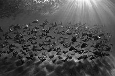 [Announced] Extraordinary 2018 Underwater Photography Award Winners!