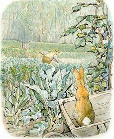 Peter sees the garden gate - beatrix potter metal print. Beatrix Potter, Children's Book Illustration, Book Illustrations, Peter Rabbit, New York Public Library, Garden Gates, Childrens Books, Illustrators, Art For Kids