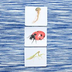 These cute critters may be courageous on their own, but it's having no backbone that unites them. Dazzle your children with hand-drawn illustrations of a bee, a spider and other creepy crawlies! Vocabulary Cards, Card Sizes, High Definition, Montessori, Hand Drawn, Spider, Creepy, Globe, How To Draw Hands