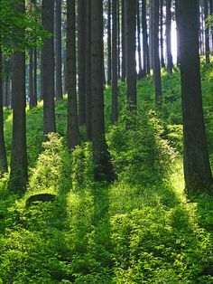 Forest by haikus* on Flickr