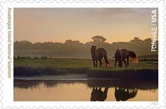 To commemorate the National Park Service's 100th birthday (#NPS100), the US Postal Service (USPS) is featuring 16 different National Park Service sites on their new Forever Stamps (#NPSStamps) and Assateague was lucky enough to be one of them!