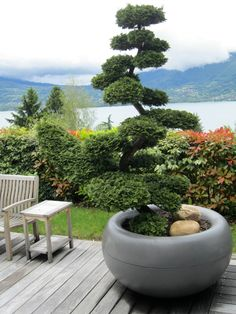 Large bonsai trees can become more or less permanent features of your backyard, and thus become full featured garden trees. Back Gardens, Small Gardens, Outdoor Gardens, Japanese Water Gardens, Japanese Garden Design, Topiary Garden, Garden Trees, Landscaping Plants, Outdoor Landscaping