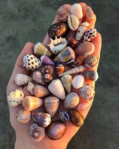 We are among leading DMC companies hosting private events and lavish weddings in Hawaii. Crystal Aesthetic, Shell Collection, Cool Rocks, Shell Beach, Shell Art, Summer Pictures, Summer Pics, Back To Nature, Pool Designs