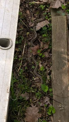 Do you see this guy? Some snakes are harmless/non-poisonous This one is more than likely after some #tasty #rats