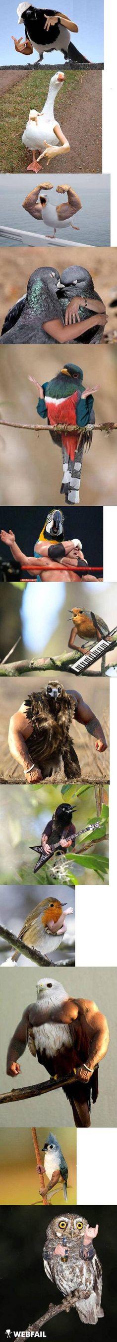 Vögel mit Armen - birds with arms :)