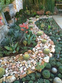 So Beautiful Succulent Garden. Succulent Plants and Rocks Join Together to Create an Amazing Landscape.