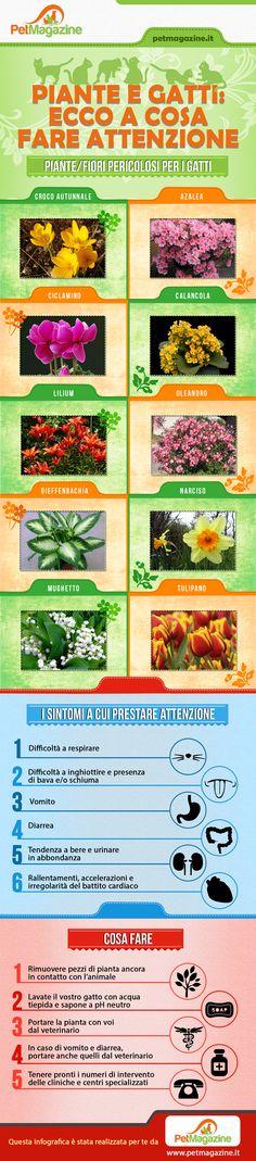 piante-velenose-infografica