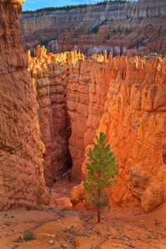 "Entering Wall Street, Bryce Canyon National Park, Utah.  Photo:  IronRodArt - Royce Bair (""Star Shooter"") beautiful uphill hike"