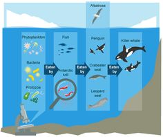 Antarctica has a rich marine ecology