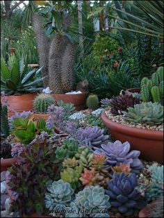 Dark light on variety of Succulents.