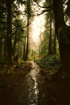 Imagem de forest, nature, and tree Beautiful World, Beautiful Places, Affinity Photo, Dark Forest, Forest Path, Magical Forest, Tree Forest, Belle Photo, Beautiful Landscapes