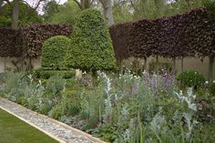 Arne Maynard for Laurent Perrier at Chelsea 2012 - Perfect pleached copper beach is a rich backdrop to stunning topiary