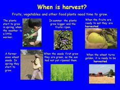 This PowerPoint gives a general background of the harvest festival, with links to other festivals/religions.