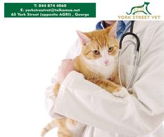 Kitten and cat leukemia, rabies and other vaccinations are available at the Vet Shop at discount prices. We also do male and female spaying, visit us and we can do a check up to make sure your cat is nice and healthy. #cats #ilovemycat #vetshop