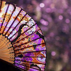 Purple. Violet. Fan. Hand fan.