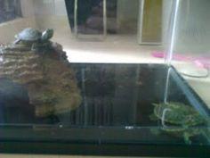 tortoises tank