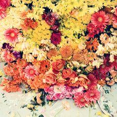 #flowers from dan monick