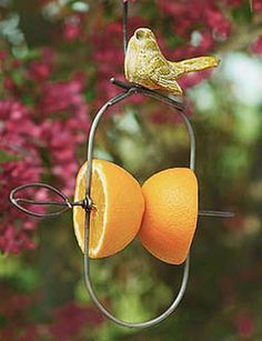 Fruit kabob Birdfeeder attracts orioles, scarlet tanagers, grosbecks..at gardeners.com