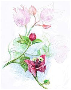 bougainvillea tattoo | Love the idea of getting a bougainvillea tattoo in memory of Mexico
