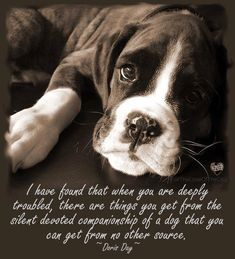~Doris Day~ no truer words spoken! Love my dog Love My Dog, Puppy Love, Boxer And Baby, Boxer Love, Boxer Puppies, Dogs And Puppies, Doggies, Terrier Puppies, Big Dogs