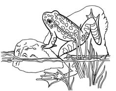 tree frog coloring 231x300 Frog Coloring Pages sketches and