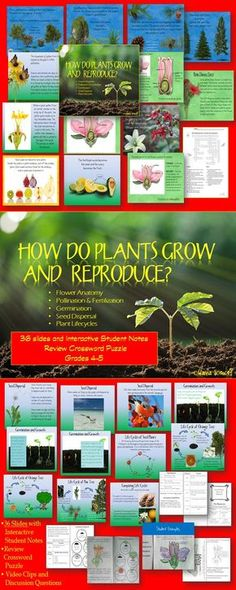 This 36 slide PowerPoint and Interactive Student Notes equips students to identify processes of sexual reproduction in flowering plants, including pollination, fertilization, seed dispersal, and germination. Students will also identify the reproductive structures of a flower and their functions. Students will compare and contrast the major stages in the life cycles of flowering and nonflowering seed-bearing plants.