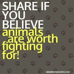 Pin if you believe animals are worth fighting for!!!  Hendrick Boards the animal saving apparel and accessory company