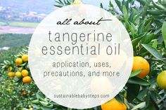 Benefits and Uses of Tangerine Essential Oil --- [Mood Lifting Perfume: In a 10 ml roller bottle, combine 3 drops Ylang Ylang, 3 drops Bergamot, 9 drops Clary Sage, 9 drops Lavender, and 12 drops Tangerine essential oils. Top with fractionated coconut or other carrier oils. Apply to pulse points throughout the day.]