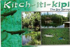 Kitchitikipi - in Michigan's Upper Peninsula