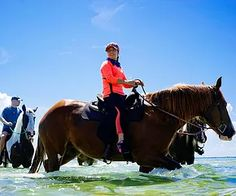 HORSEBACK RIDING ON ANNA MARIA ISLAND, FLORIDA ~ BOOK NOW - THINGS TO DO, ACTIVITIES, TOURS and RENTALS on Anna Maria Island, Florida!