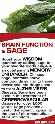 Boost your wisdom quotient by adding sage to your favorite foods. Sage is an outstanding memory enhancer. Chinese sage, contains active compounds similar to those developed into drugs used to treat Alzheimer's Disease. Sage has been used in the treatment of cerebrovascular disease for over 1,000 years. Sage provides a useful therapeutic option to the use of pharmaceutical AChE inhibitors.