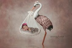 Stork and a baby. Digital backdrop of a stork holding a baby. Calgary and Airdrie newborn baby photographer - Milashka Photography Delivery Photos, Newborn Session, Baby Newborn, Fall Mini Sessions, Happy First Birthday, Holding Baby, Digital Backdrops, Baby Portraits, Baby Milestones