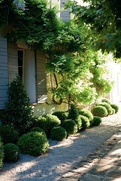 simple landscape green border inspiration, provence. (ilex forms a natural round cluster and is easy to maintain)