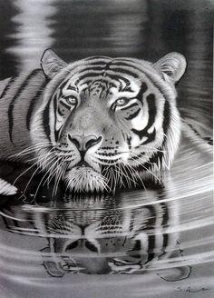 Realistic Animal Pencil Drawings (17)