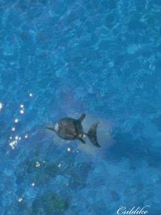 dolphin photo: a dolphin dolphin2.gif