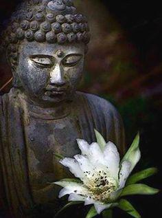 Zen Humanism - brahman-god-oceanoflove: Mind consciousness is. Art Buddha, Buddha Kunst, Buddha Zen, Gautama Buddha, Buddha Buddhism, Serenity, Reiki, Brave, Little Buddha
