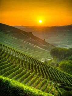 «HAPPY EASTER»   «FELICES PASCUAS»    Vineyards at sunrise (Piemonte, Italy).