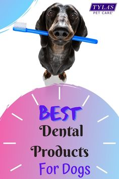 Does your puppa have funky breath? They might have plaque. The best way to rid your pups mouth of plaque is by using a good dental product for dogs. We have found the top five in 2020 for your convienience. #dog #dogs #dogteethcleaning #dogbadbreath #dogplaque #plaqueondogsteeth Dog Dental Care, Pet Care, Bad Dog Breath, Healthy Pets, Dog Teeth, Teeth Cleaning, Pet Health, Best Dogs