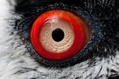 21 Cool Pictures of Beautiful Eyes | Newscom FocalPoint